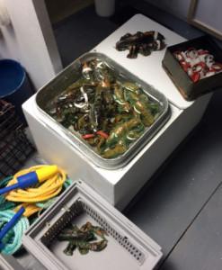 Lobster Tote Bill McKeon_2280 copy